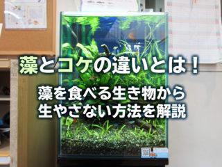 藻とコケの違いとは!水槽に発生させない方法と藻を食べる生き物を解説!
