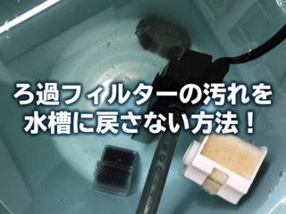 ろ過フィルターの汚れを水槽に戻さない掃除方法!気を付けるポイントとは