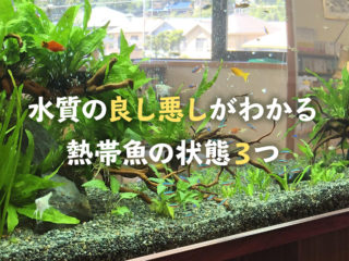 水槽の状態で熱帯魚は変化します!水質の良し悪しがわかる熱帯魚の状態3つ