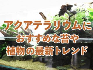 【2019年最新】アクアテラリウムにおすすめな苔や植物の最新トレンド