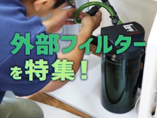 【2020年度版】水槽用外部フィルター特集!おすすめ10選と選び方!