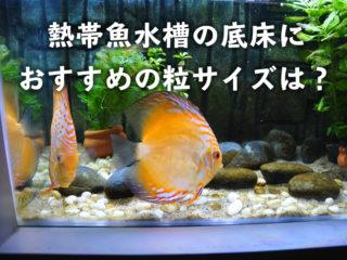 熱帯魚水槽の底床におすすめの粒サイズは?水槽のコンセプト毎にサイズを分けよう!