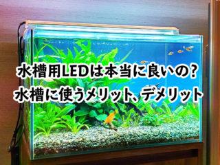 水槽用LEDは本当に良いの?水槽にLED照明を使うメリット、デメリット