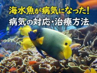 海水魚が病気になった!病気の対応・治療方法と予防についてプロが解説!
