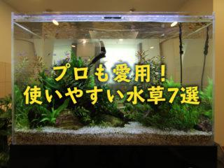 プロも使いやすい水草!採用される理由とアクアガーデンでよく使う水草7選