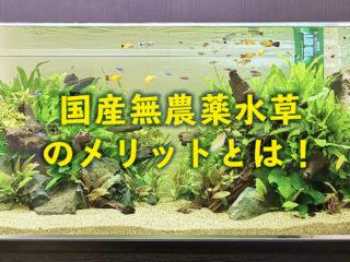 国産、無農薬水草のメリットとは!外国産の水草、農薬混入水草と比較解説