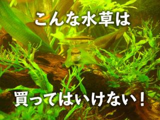 こんな水草は買ってはいけない!購入時に見るべきポイントと健康な水草とは