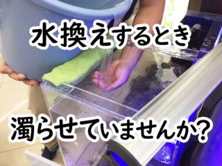 水換えするとき濁らせていませんか?ダメな理由と水槽内を濁らせない方法