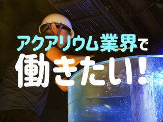 熱帯魚アクアリウム業界で働きたい!ショップ?問屋?就職先をまとめました