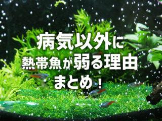 熱帯魚の衰弱原因が分からない!病気以外に熱帯魚が弱る理由まとめ!