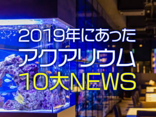 2019年のアクアリウム10大ニュース!今年、注目されたのはコレだ!