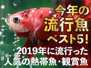 今年の流行魚ベスト5!2019年に流行った人気の熱帯魚・観賞魚はこれ!