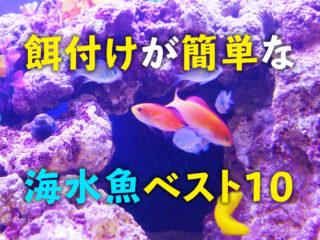 餌付けが簡単な海水魚ベスト10!長生きにはエサを食べてくれることが大切