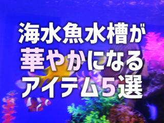 海水魚水槽が華やかになるアイテム5選!アクセサリーのメリット・デメリット