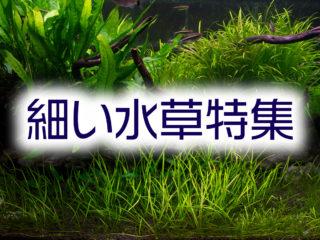 細い水草特集!育てやすく美しいスレンダーな水草を10種紹介します!