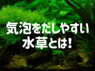 気泡を出しやすい水草とは!光合成が活発な水草を5種を厳選してご紹介!