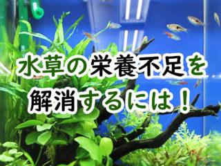 水草の栄養不足はこれで解消!水草が弱っている原因・症状から対策まで!