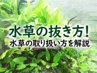水草の抜き方!レイアウトを変更するときの水草の取り扱い方を解説します