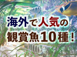 海外で人気の観賞魚10種!人気種から次のアクアリウムトレンドを考える!