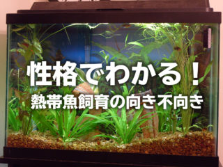 性格でわかる!熱帯魚飼育の向き不向き!水槽管理や飼育は大変なのか!?