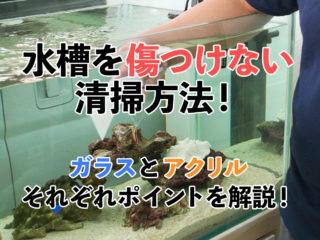 水槽を傷つけない清掃方法!ガラスとアクリルそれぞれポイントを解説!