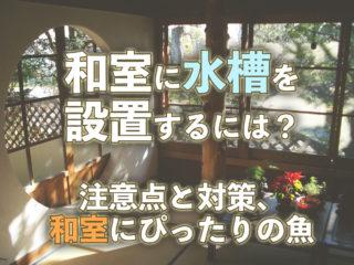 和室に水槽を設置するには?注意点と対策、和室にぴったりの魚もご紹介!