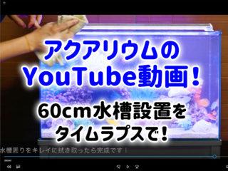 アクアリウムのYouTube動画!60cm水槽設置をタイムラプスで!