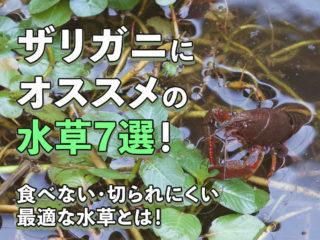 ザリガニにオススメの水草7選!食べない・切られにくい最適な水草とは!