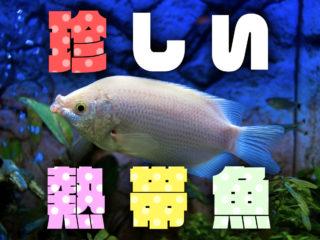 珍しい熱帯魚特集!透明で骨が見える魚から変わった特徴を持つ珍魚たち!
