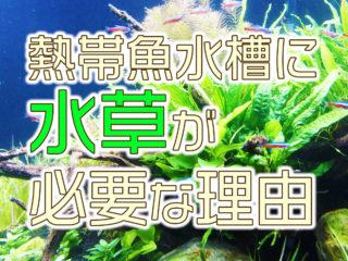 水草の重要性とは! 熱帯魚水槽に水草が必要な本当の理由をプロが徹底解説
