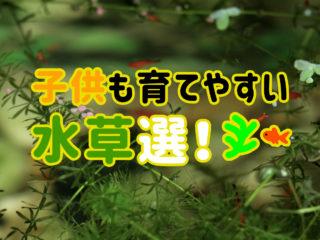 こどもが簡単に育てられる水草5選!基本の水草からちょっぴりレアな種類!