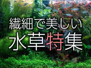 繊細で美しい水草特集!葉が細かく上品な水草10種をご紹介・解説します