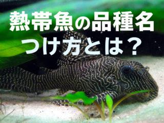 熱帯魚の名前はどうやってつけるの?かっこいい・変わった品種名の付け方!