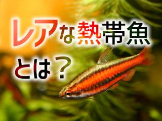 レアな熱帯魚とは!なかなか出会えないけど人気の魚11種!魅力を解説!