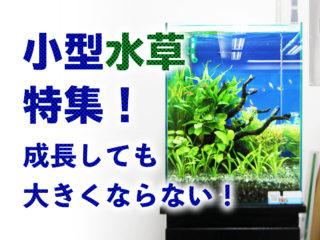 小型水草特集!成長しても大きくならない小型水槽に向いた水草をご紹介!