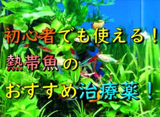 初心者でも使える!熱帯魚のおすすめ治療薬!薬の種類から変更方法まで解説
