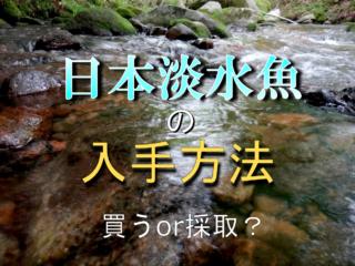 日本淡水魚ってどこで買えるの?川で採取してもいい?入手方法をご紹介!