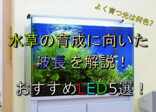 水草が育つ光は何色?育成に向いた波長の解説と色別おすすめLED5選!