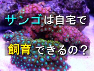 サンゴは自宅で飼育できるの?サンゴの基礎知識やおすすめ種類・購入方法