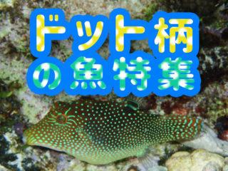 ドット柄の魚特集!ほっこりかわいい水玉模様の魚10選をご紹介します!