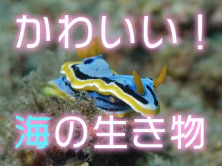 可愛い海の生き物8選!水槽飼育が可能で癒される魚やエビなどをご紹介!
