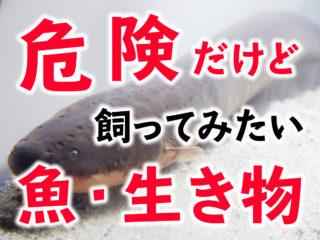 危険、毒でも飼ってみたい!魚や生物!ピラニアからクラゲまで!