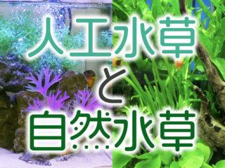 人工水草と自然水草、どちらがよいの?メリットデメリットを解説します