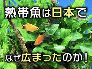 熱帯魚は日本でなぜ広まったのか!熱帯魚飼育の歴史と人気魚種をみる!