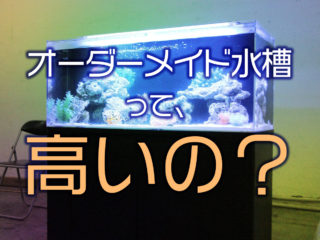 オーダーメイド水槽って高いの?値段が決まる条件・発注テクニックをご紹介