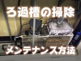ろ過槽の掃除・メンテナンス方法!オーバーフローの管理頻度、掃除道具とは