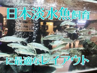 日本淡水魚飼育に最適なレイアウトとは!水流・水温・混泳まで解説します