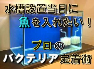 水槽設置当日に魚を入れたい!非常識を可能に変えるプロのバクテリア定着術