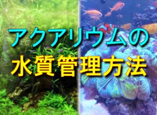 アクアリウムの水質管理方法!魚・水草・サンゴを健康に育てる水質例とは