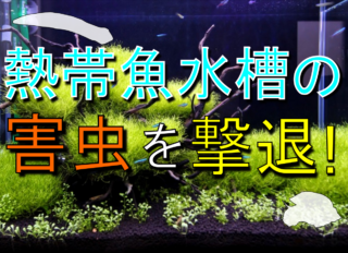 熱帯魚水槽の害虫を撃退!貝や虫などの入り込みやすい種類と駆除法を解説